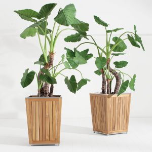 Desert Planter